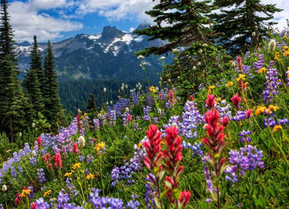Mount Rainier National Park mountains meadow flowers wallpaper
