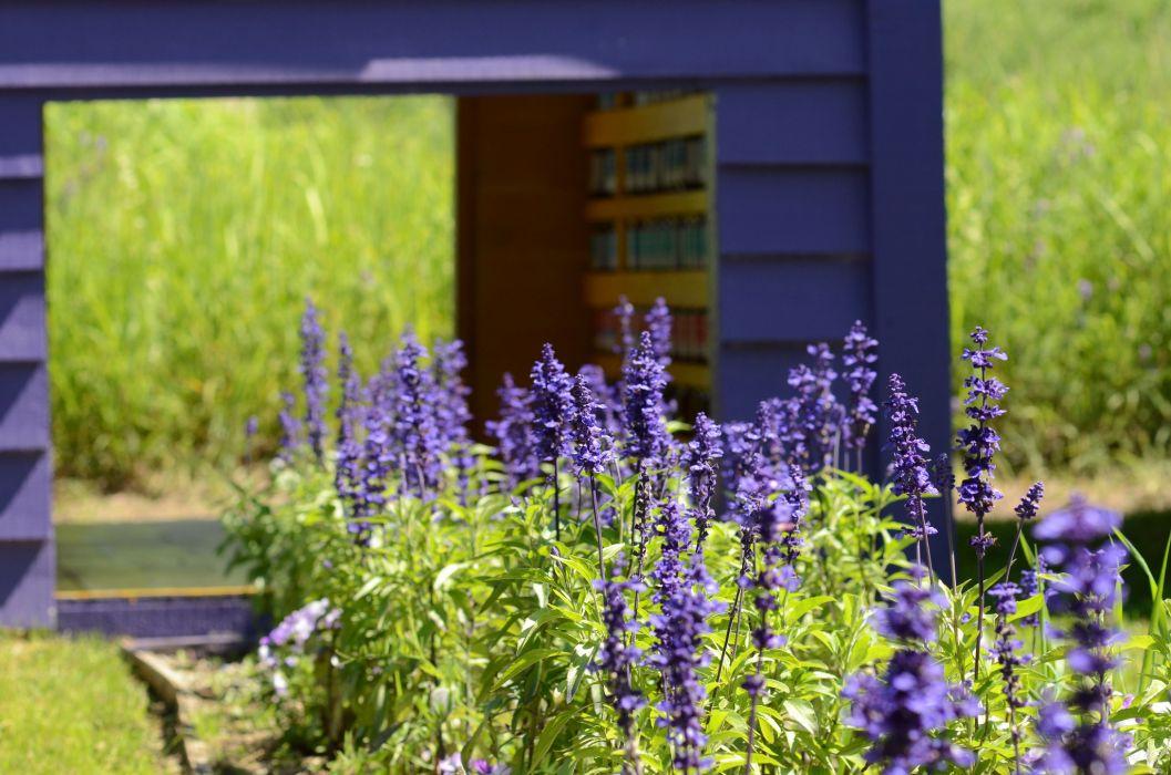 Summer garden purple flowers grass motion blur bokeh wallpaper
