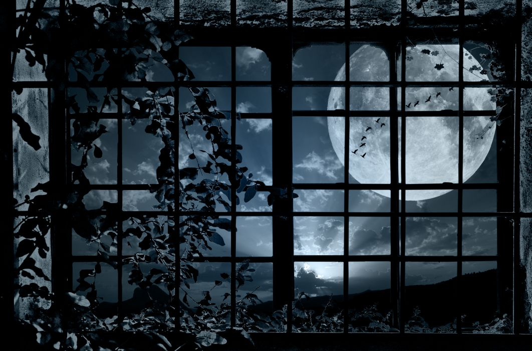 night window grille plant bindweed moon flock birds mood bokeh wallpaper