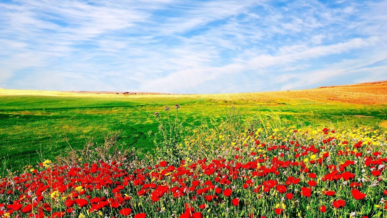 Nature Flowers Sown Field Landscape Sky Wallpaper