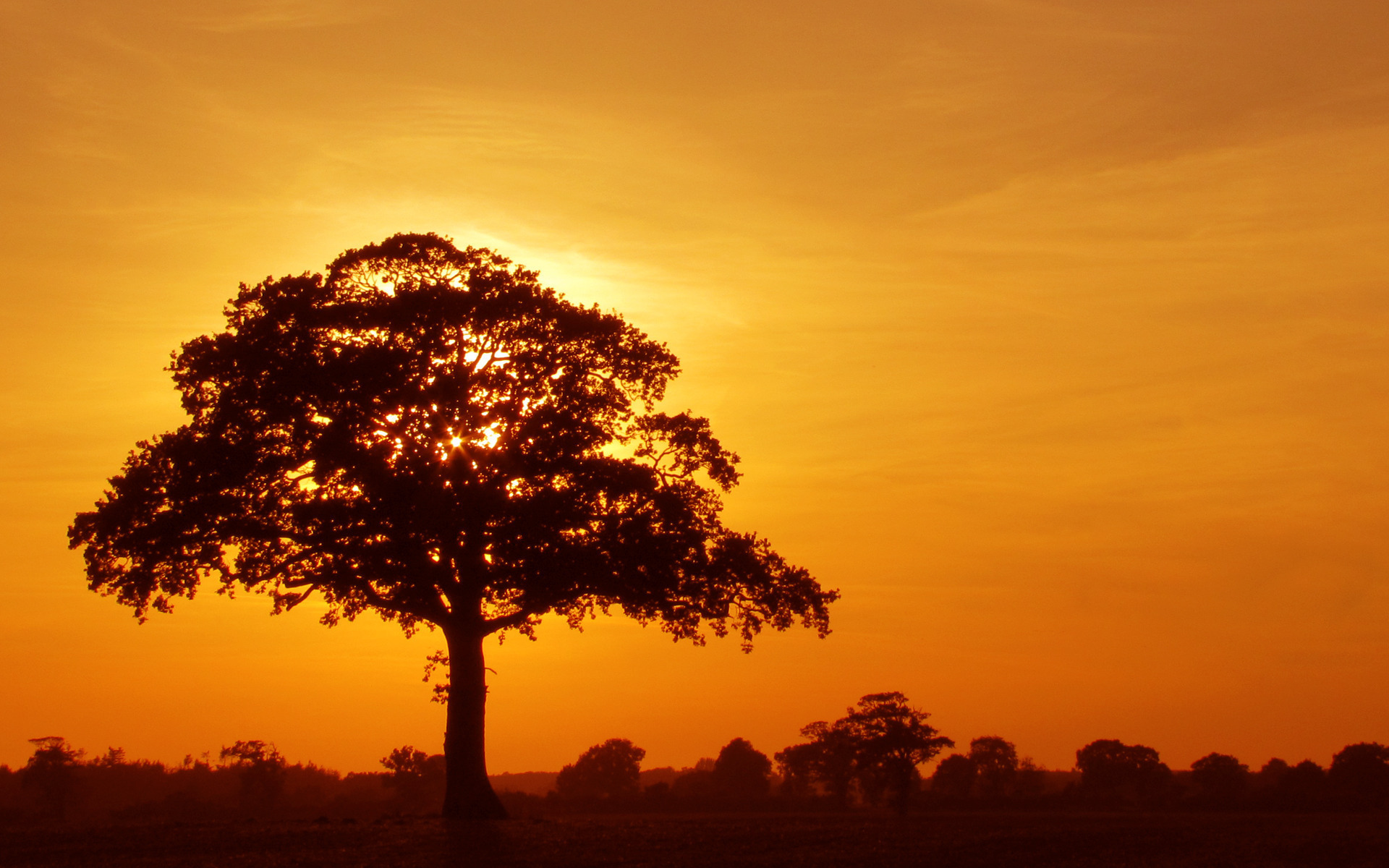 Trees Silhouette Sunset Tree crown sunset silh...