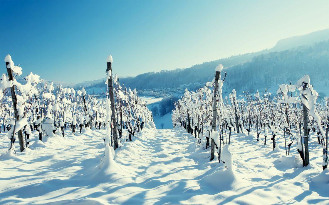 snow winter wallpaper wood vineyard winter mountain village scenery wallpaper
