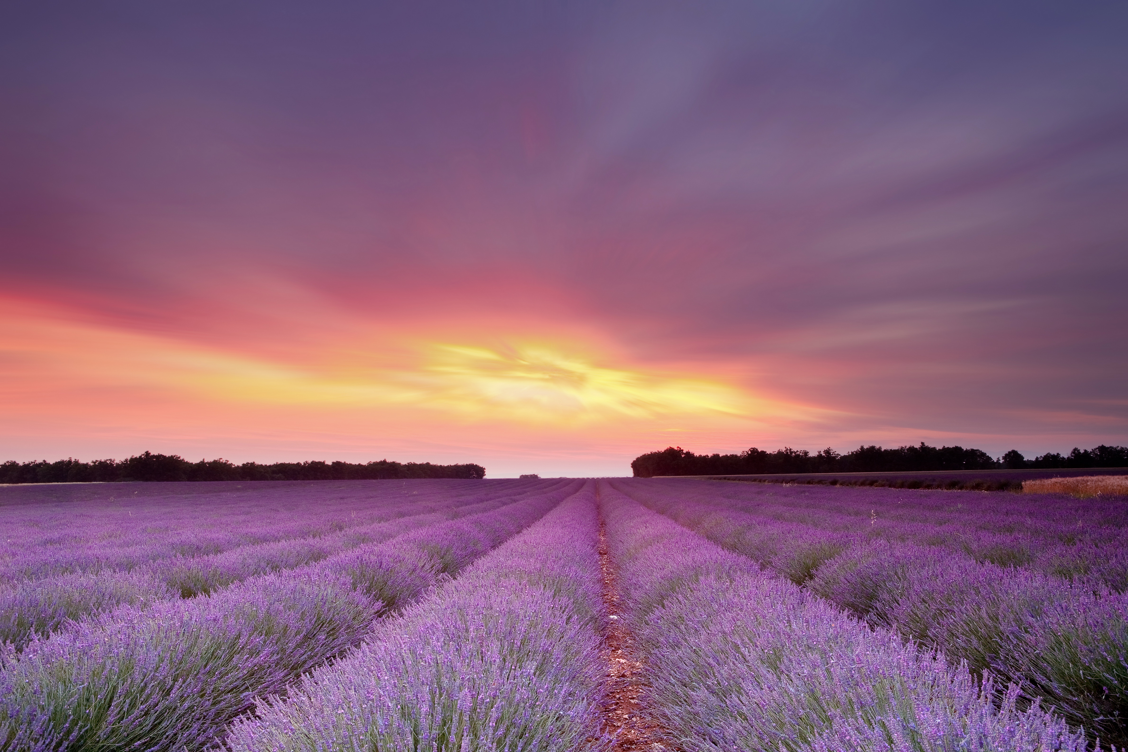 Lavandula Fields Sky Clouds Flowers Sunset Sunrise Wallpaper