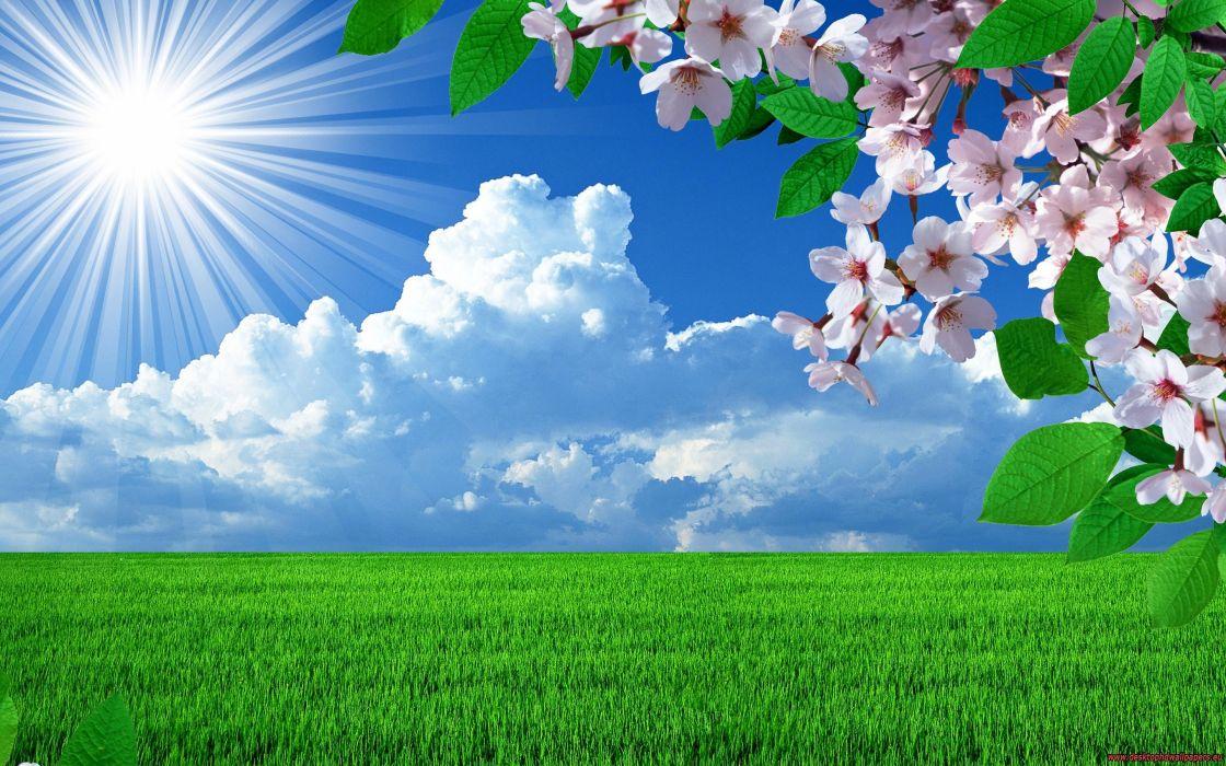 nature spring flowers landscapes trees sky landscape wallpaper