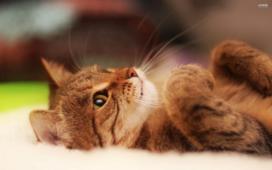 Cat Whiskers wallpaper