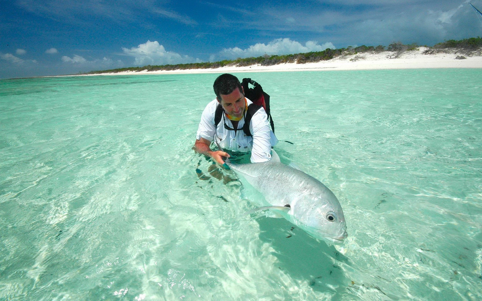 Stock Photographs of Stingray in Shallow Ocean Water - Stingray in ...