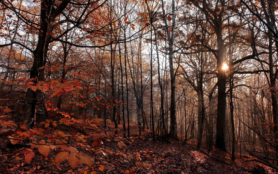 Fall Forest Red leafs wallpaper