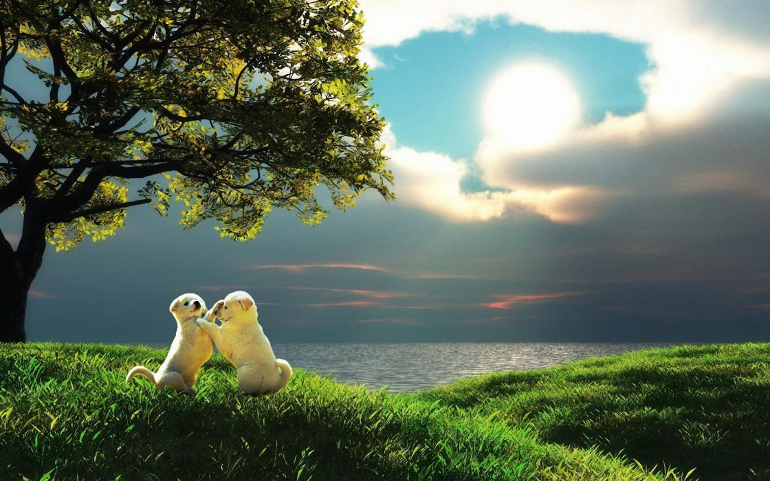 sea tree grass puppies puppy photoshop ocean mood cute sky clouds wallpaper