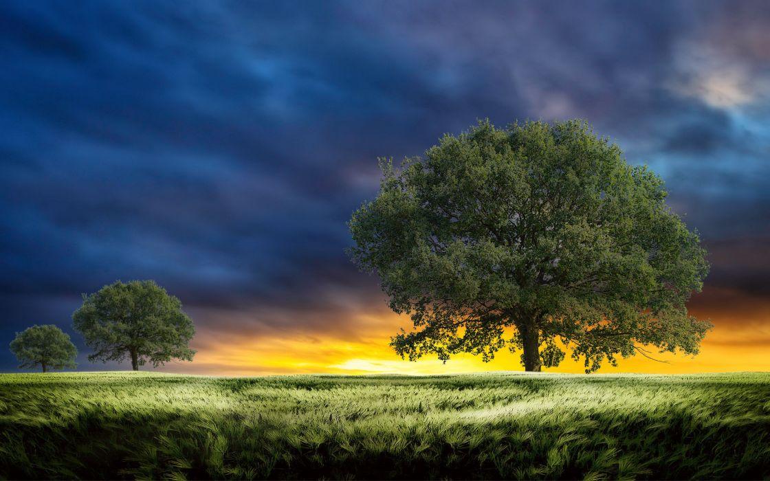 sunset field trees landscape clouds wheeat grass wallpaper