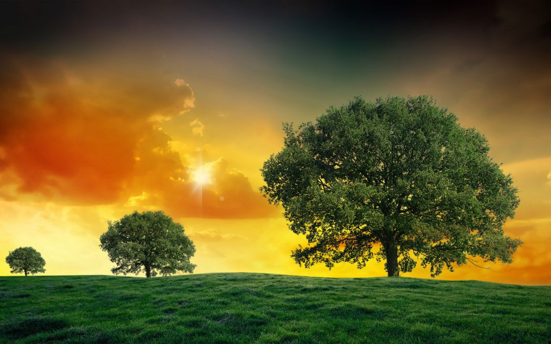 sunset field trees landscape clouds wallpaper