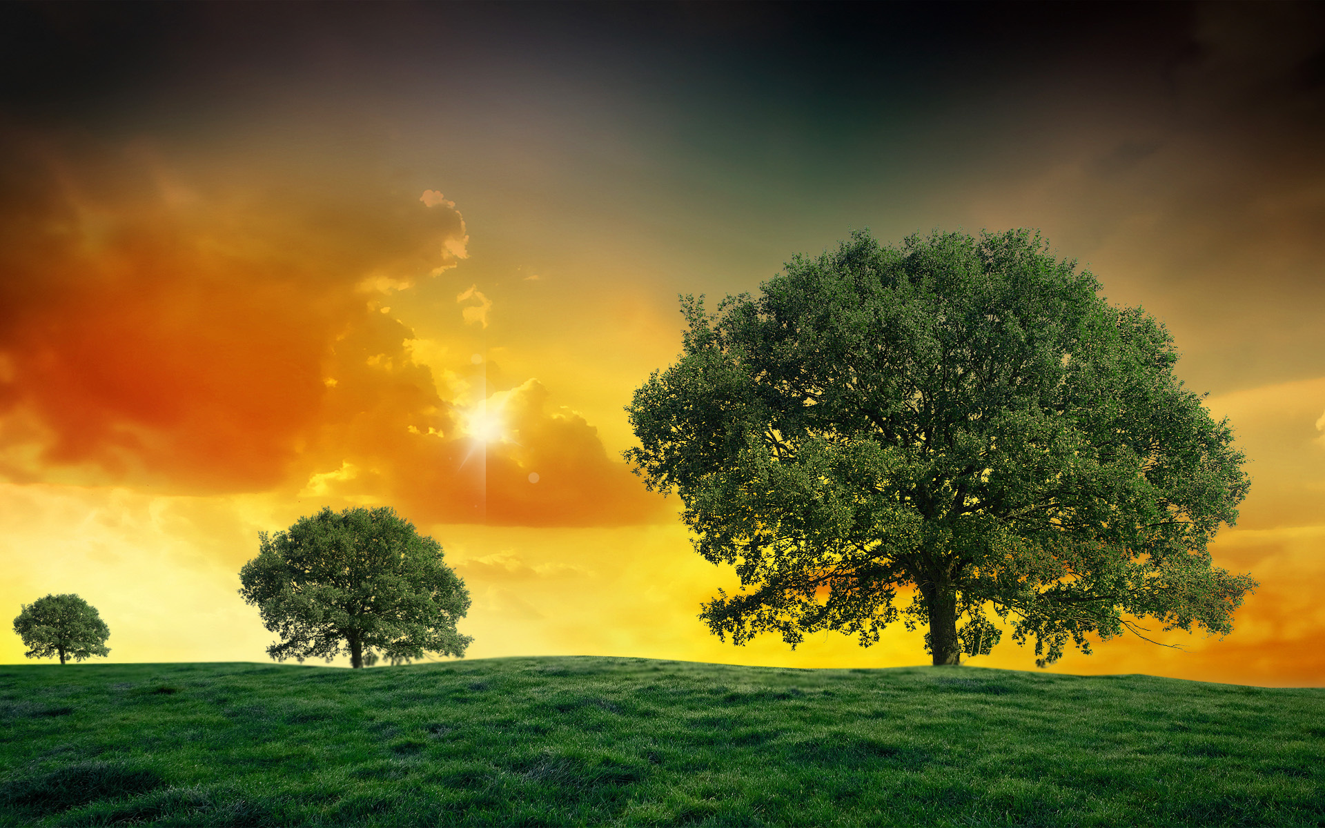 Sunset field trees landscape clouds wallpaper 1920x1200 for Landscape trees