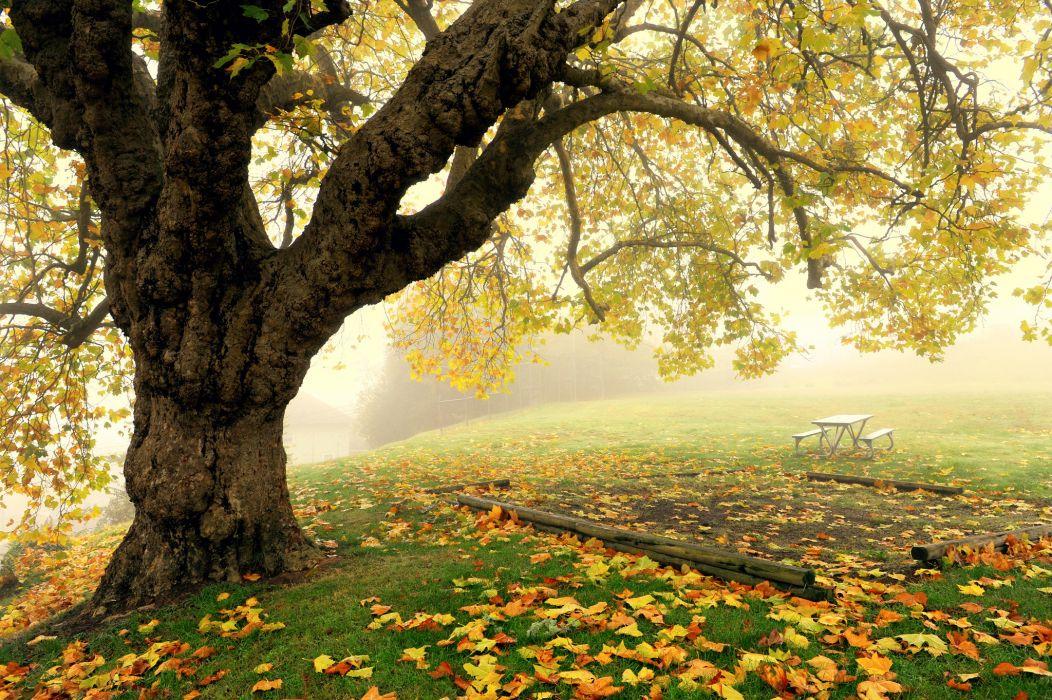 tree fog autumn park bench wallpaper