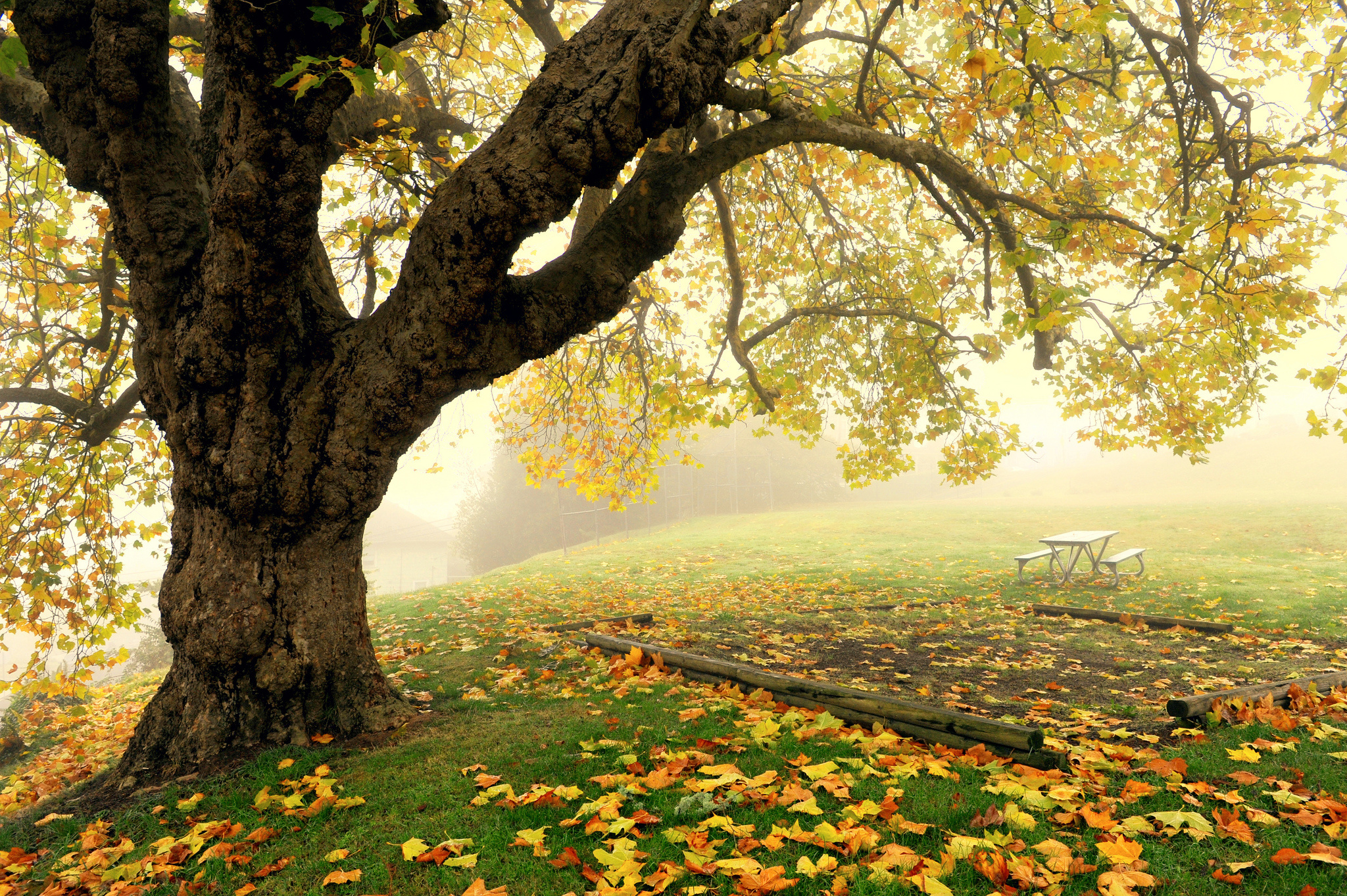 Tree fog autumn park bench wallpaper | 2048x1363 | 143891 ... for Park Background With Bench  269ane