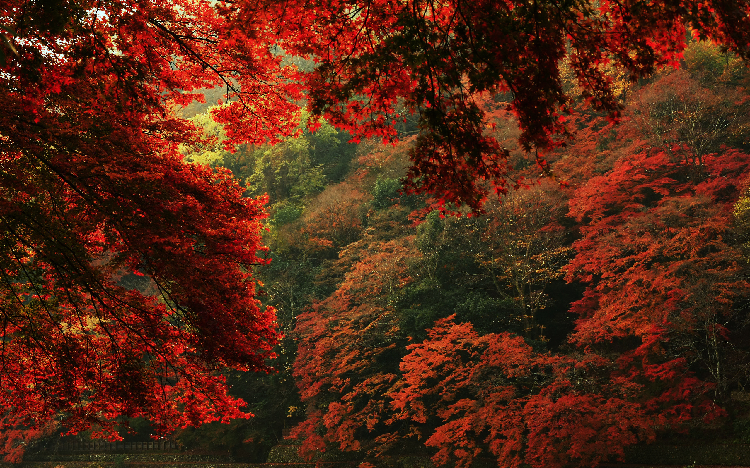 red leaves hd wallpaper - photo #38