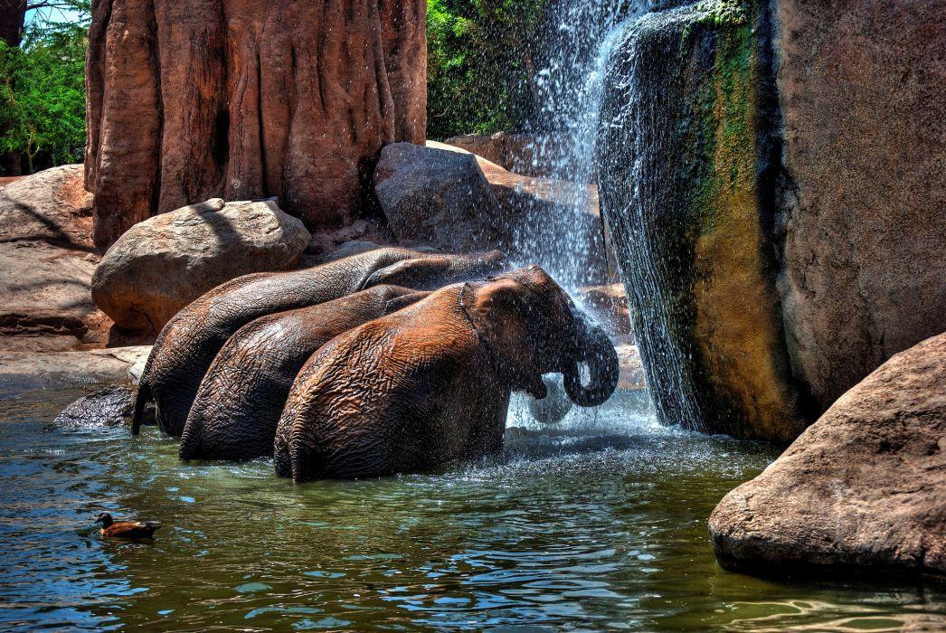 elephant rocks water shower wallpaper