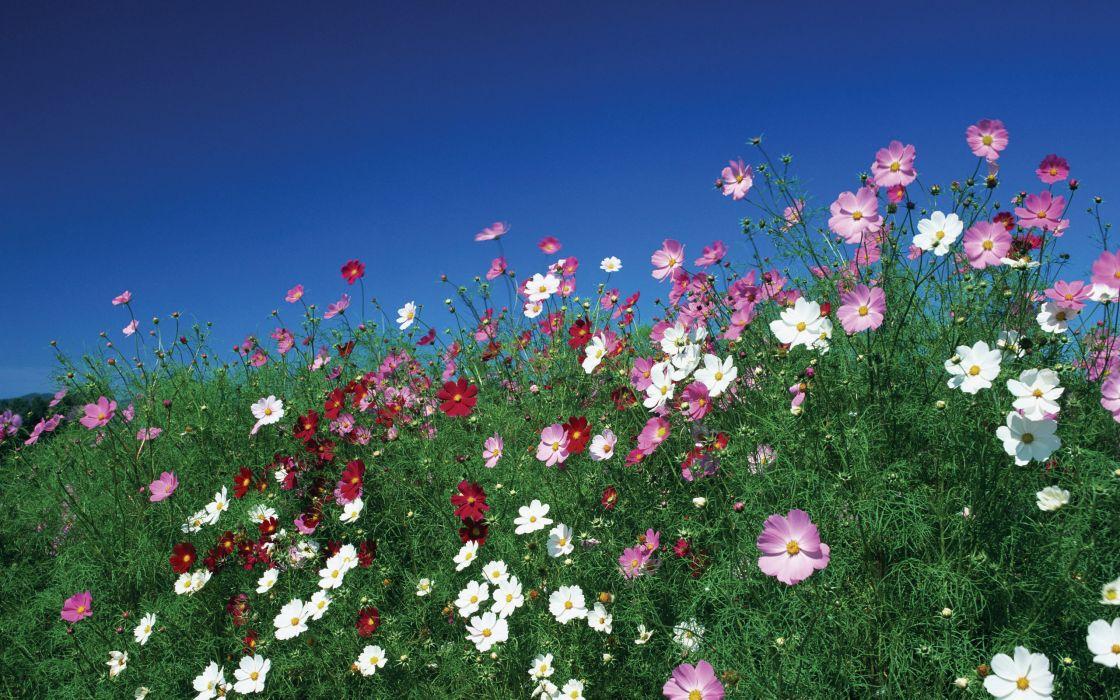 flowers sky meadow wallpaper