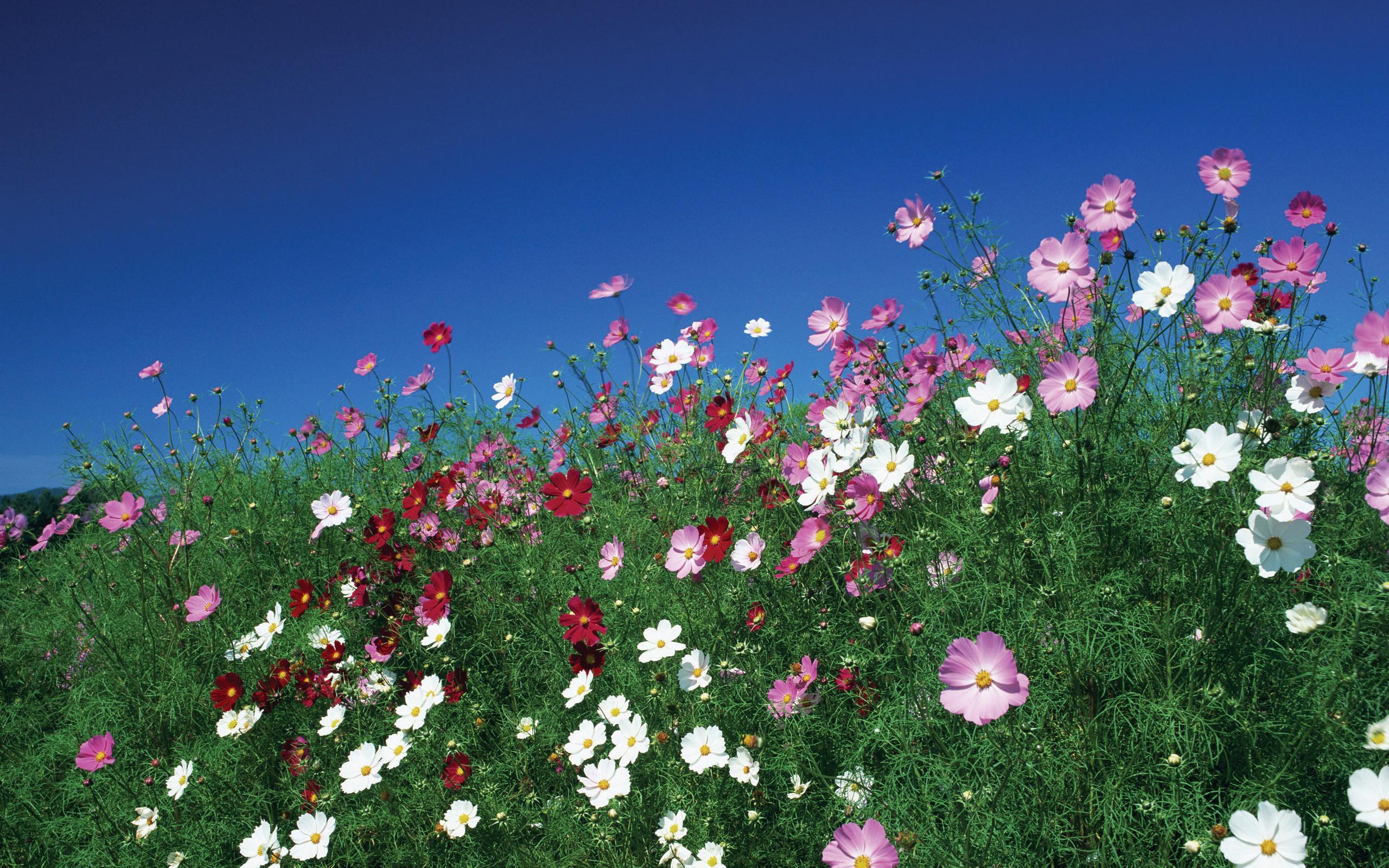 Flower Meadow Wallpaper Flowers Sky Meadow Wallpaper