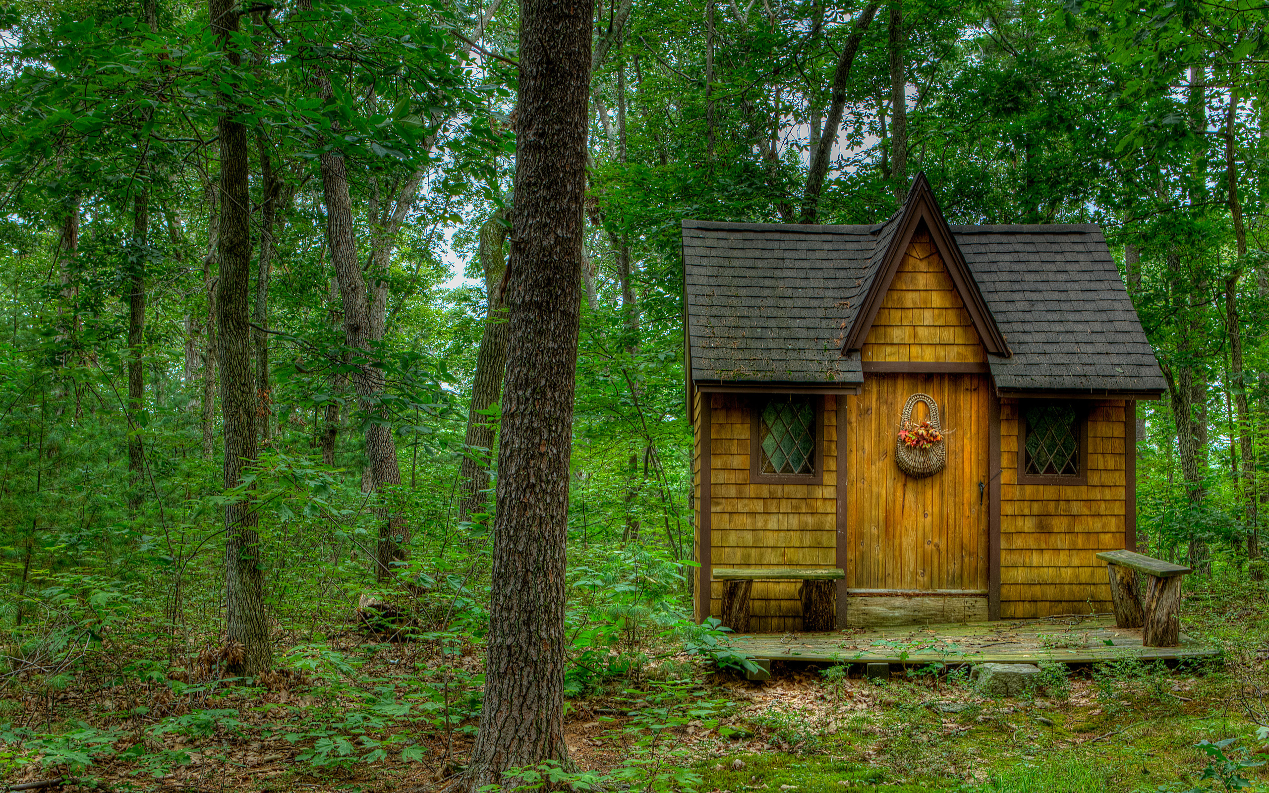 Cabin Home Plans Forest House Trees Nature Landscape Wallpaper 2560x1600
