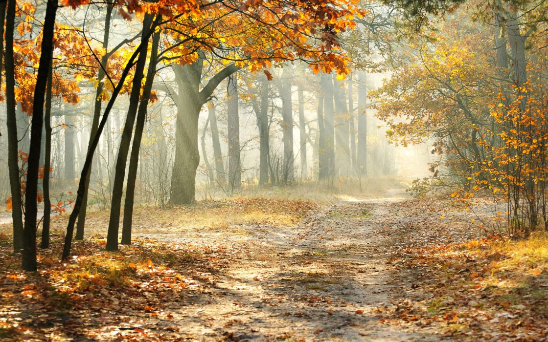 landscape morning nature beautiful road autumn trees  leaves wallpaper