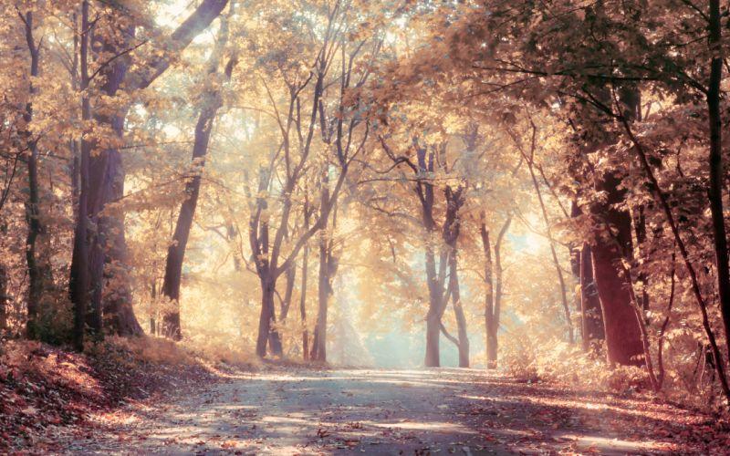 sunbeams autumn trees beautiful leaves landscape road nature wallpaper