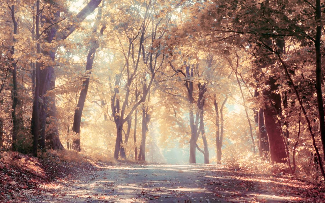sunbeams autumn trees beautiful leaves landscape road nature wallpaper