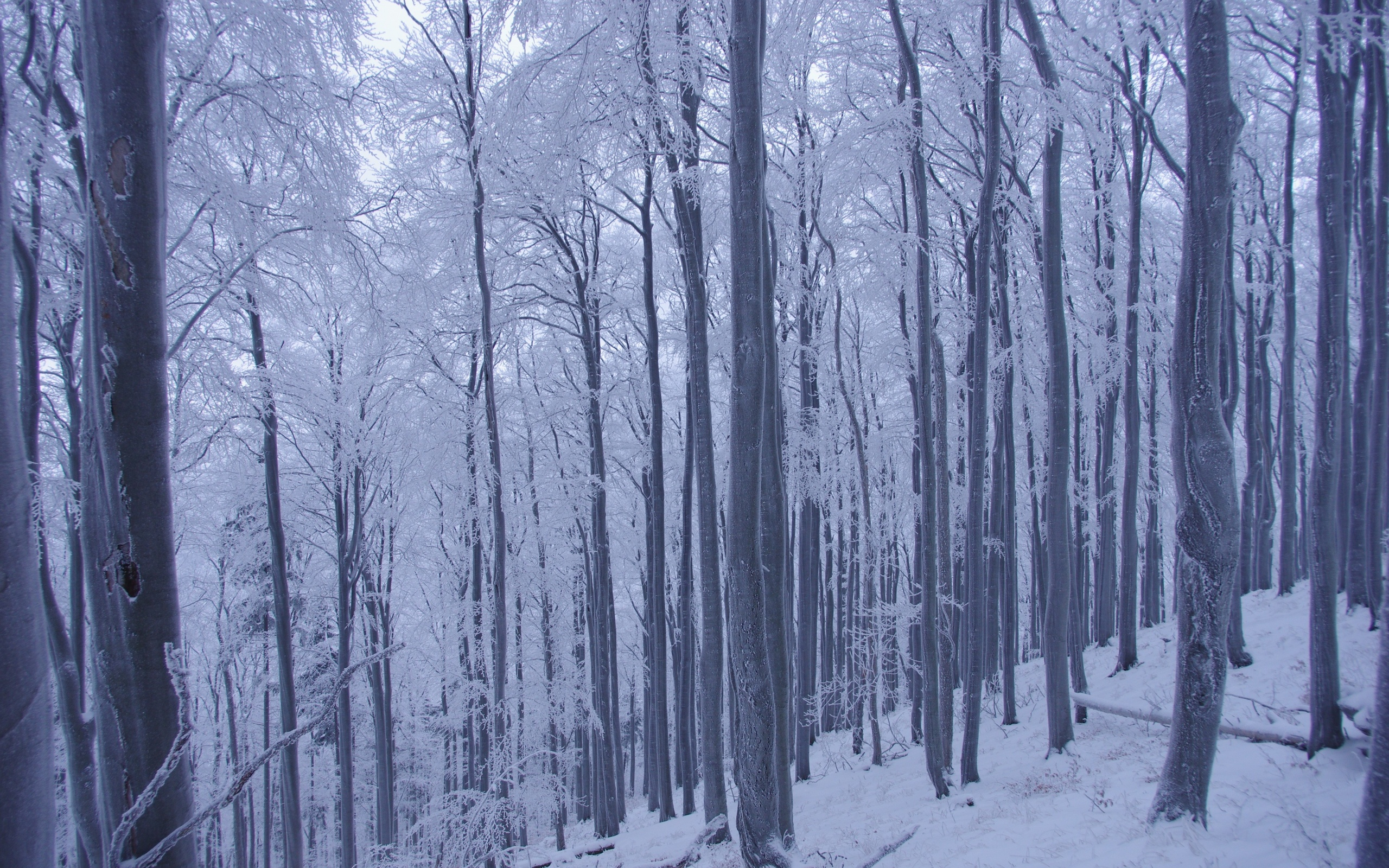 winter forest trees snow landscape g wallpaper 2560x1600