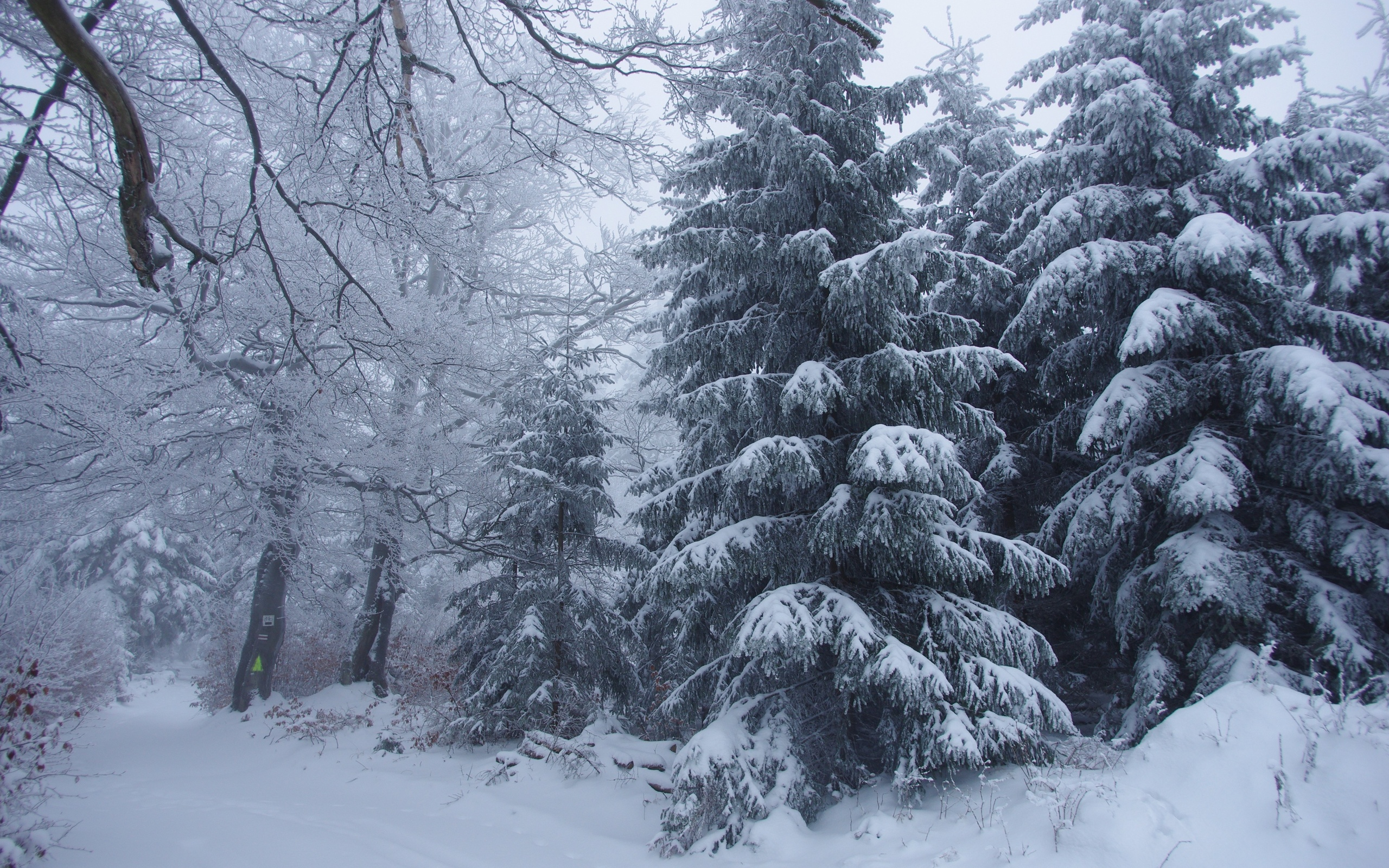 winter forest trees snow - photo #13
