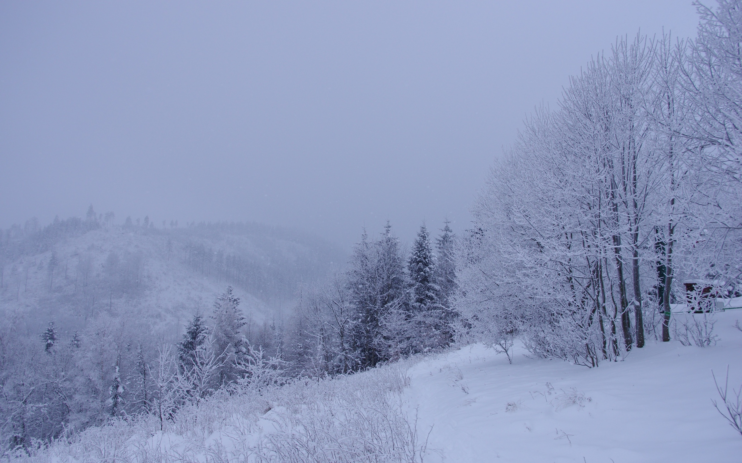 winter forest trees snow - photo #14