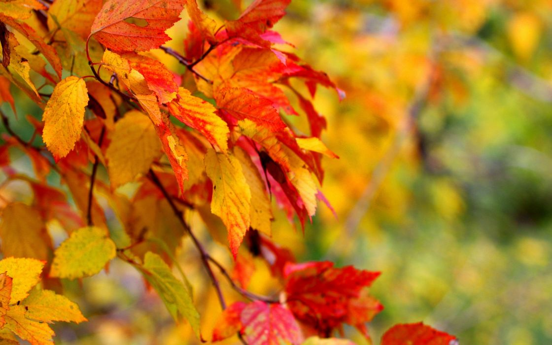 Autumn Wallpaper branch leaf close-up wallpaper