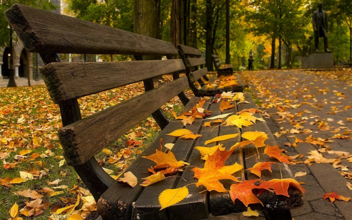 Autumn Wallpaper park foliage leaves bench bokeh wallpaper