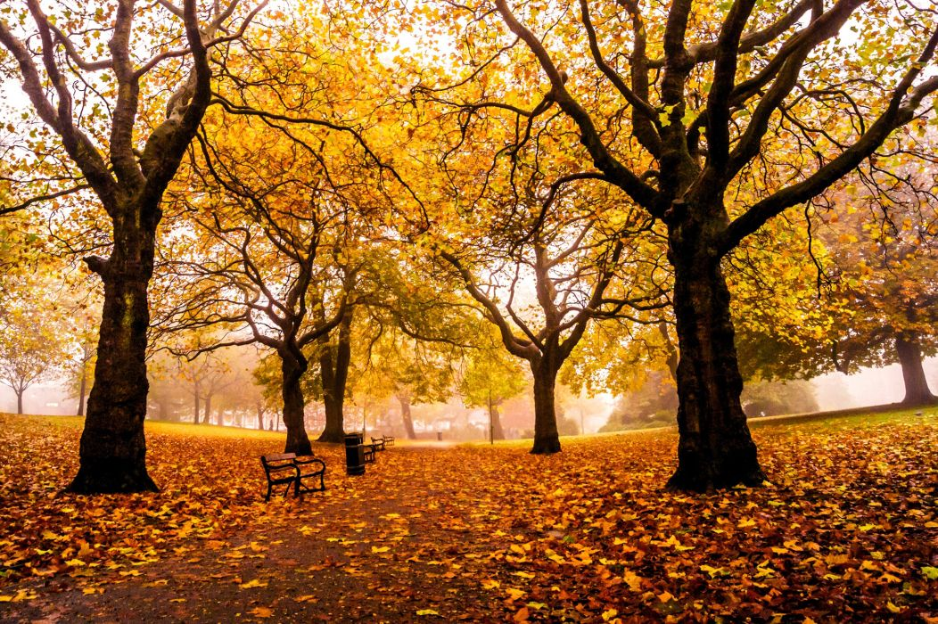 england weston park sheffield autumn mood wallpaper