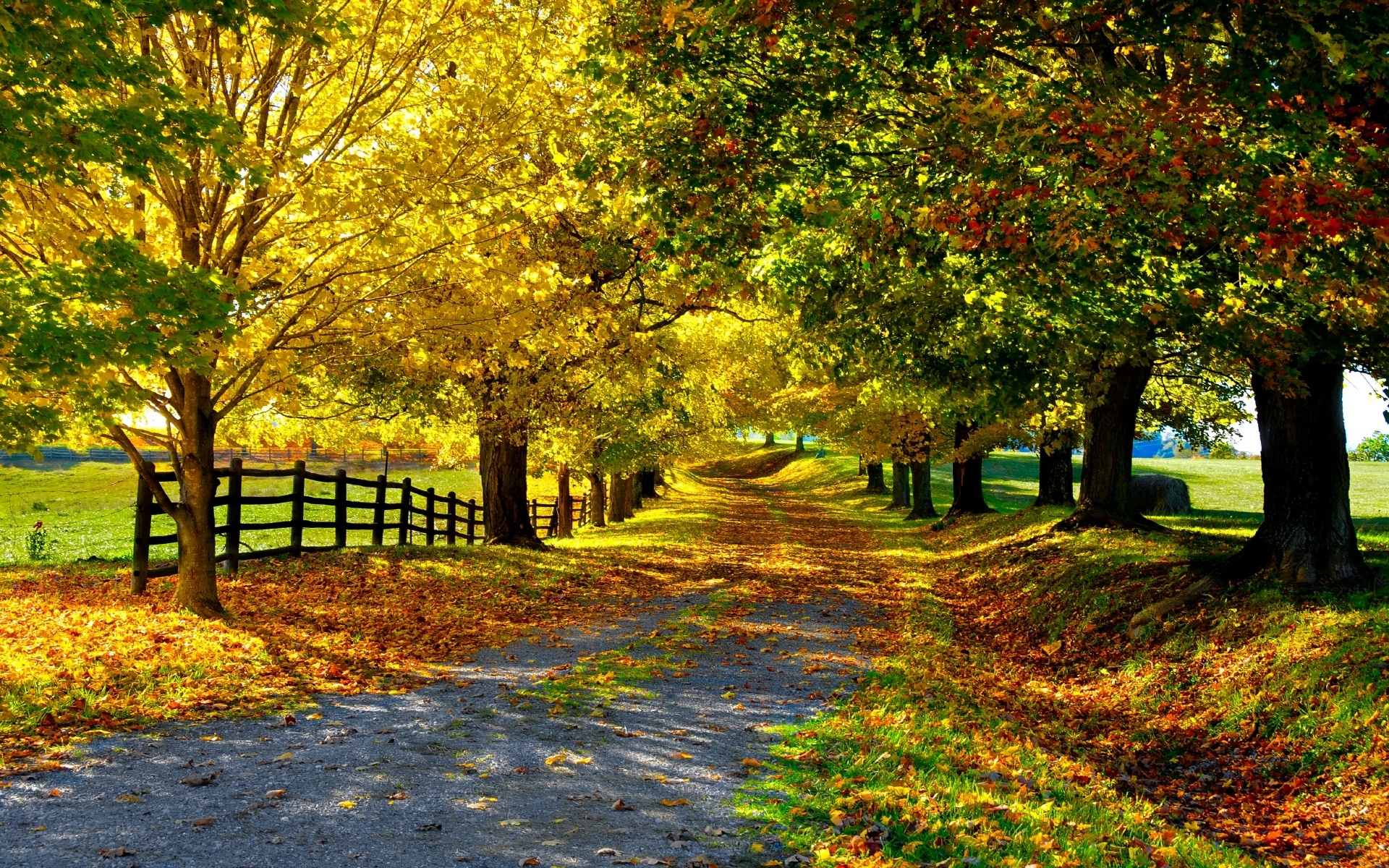 Trees leaves foliage road golden autumn wallpaper | 1920x1200