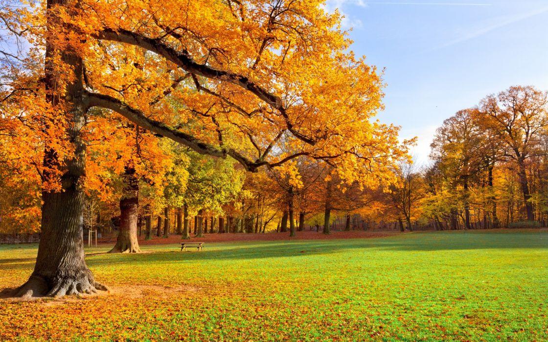 trees meadow park park foliage golden autumn wallpaper