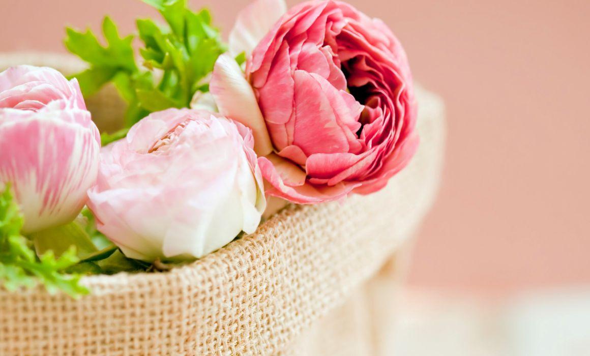 Peonies Pink Color Flowers Bokeh Wallpaper 2650x1600 147166