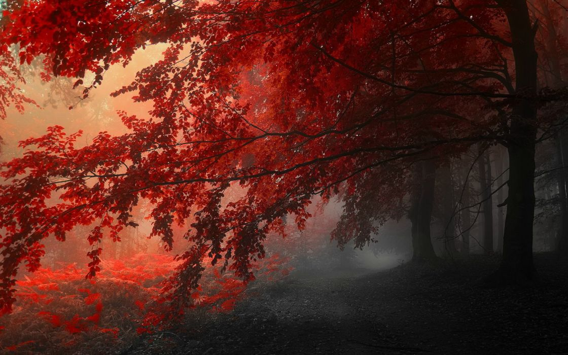 Trees Forrest Red Leafs wallpaper