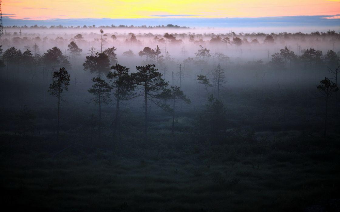 Forrest Fog Mist wallpaper