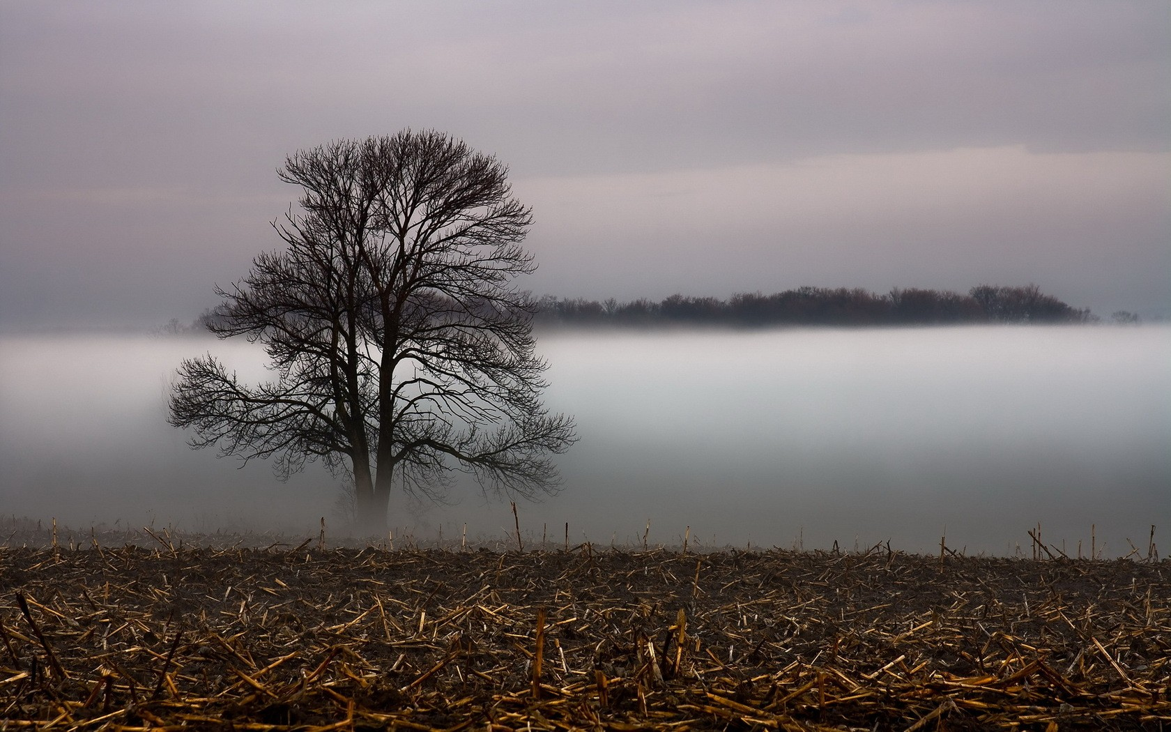 landscapes trees fog - photo #5