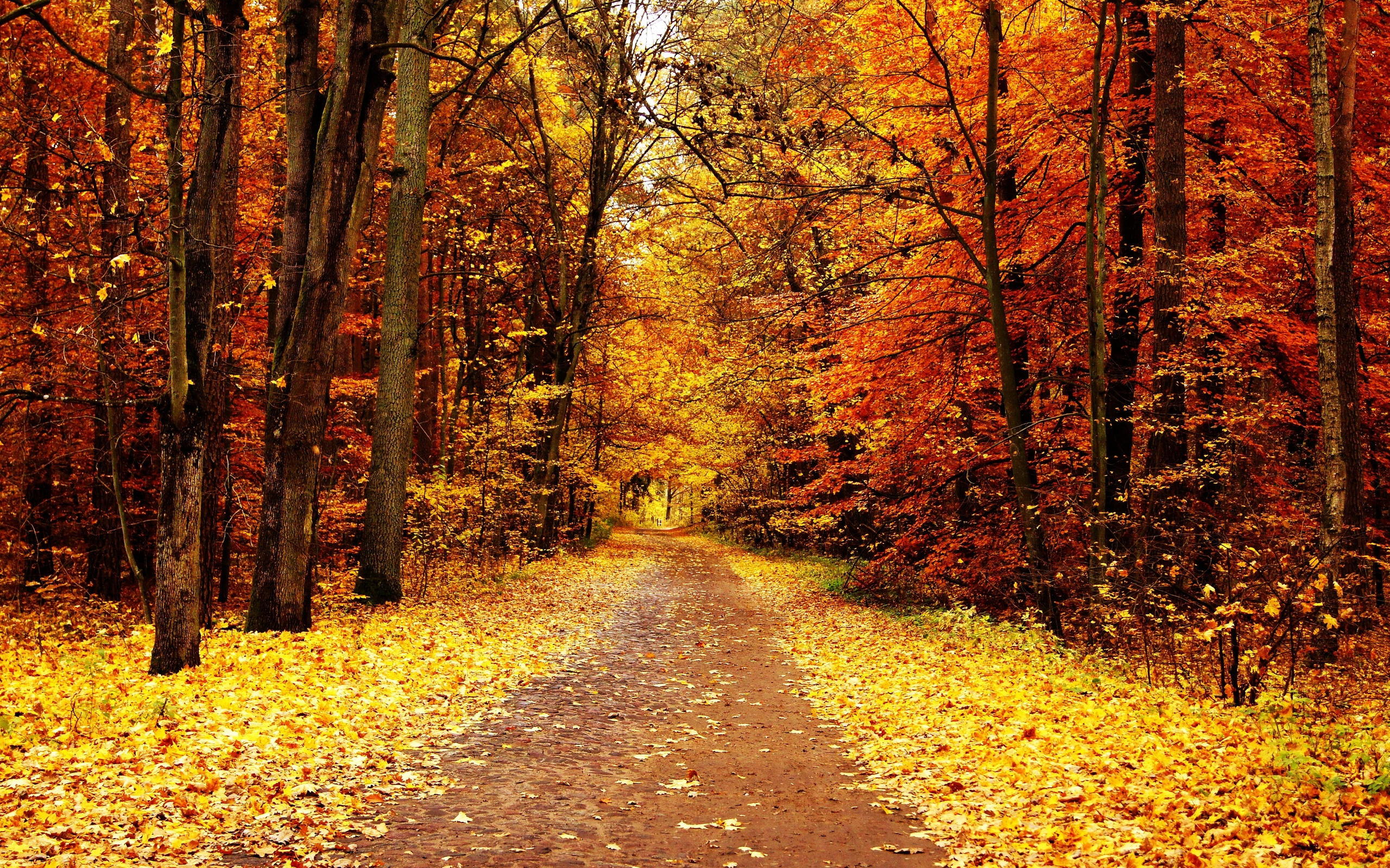 free autumn wallpaper images