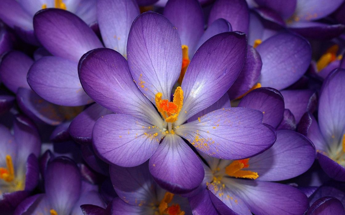 flowers  purple  yellow bokeh wallpaper