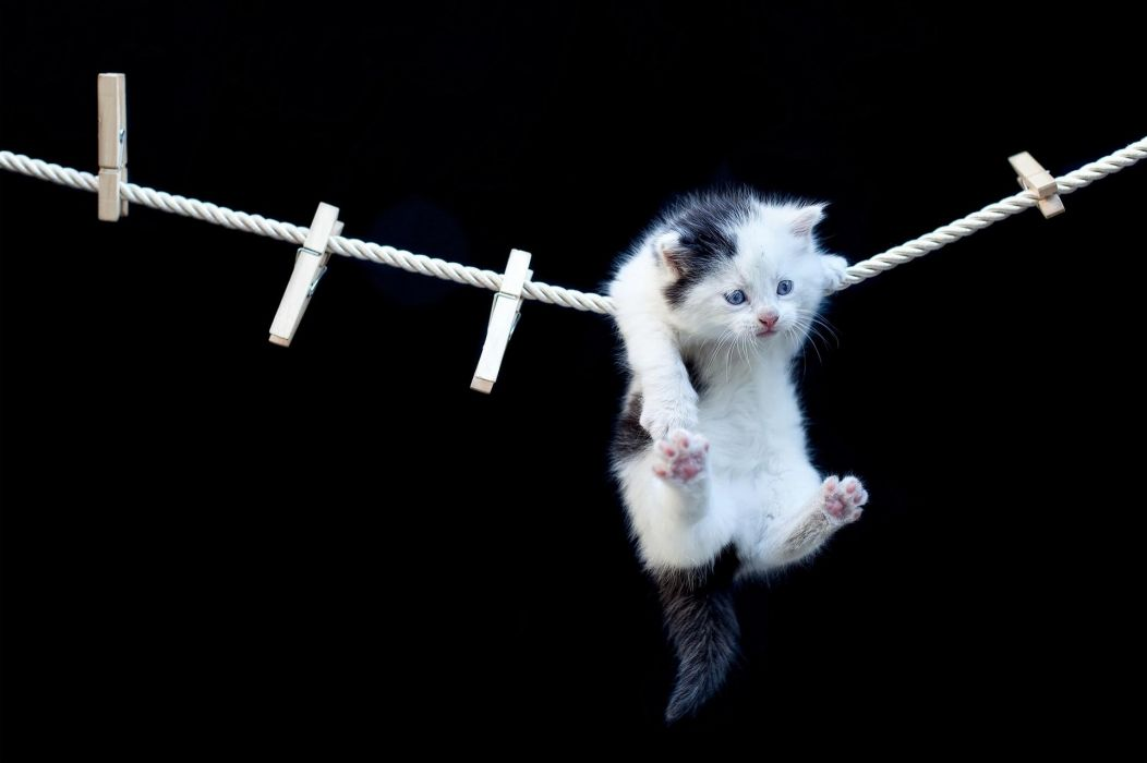 kitten rope clothespins cat wallpaper