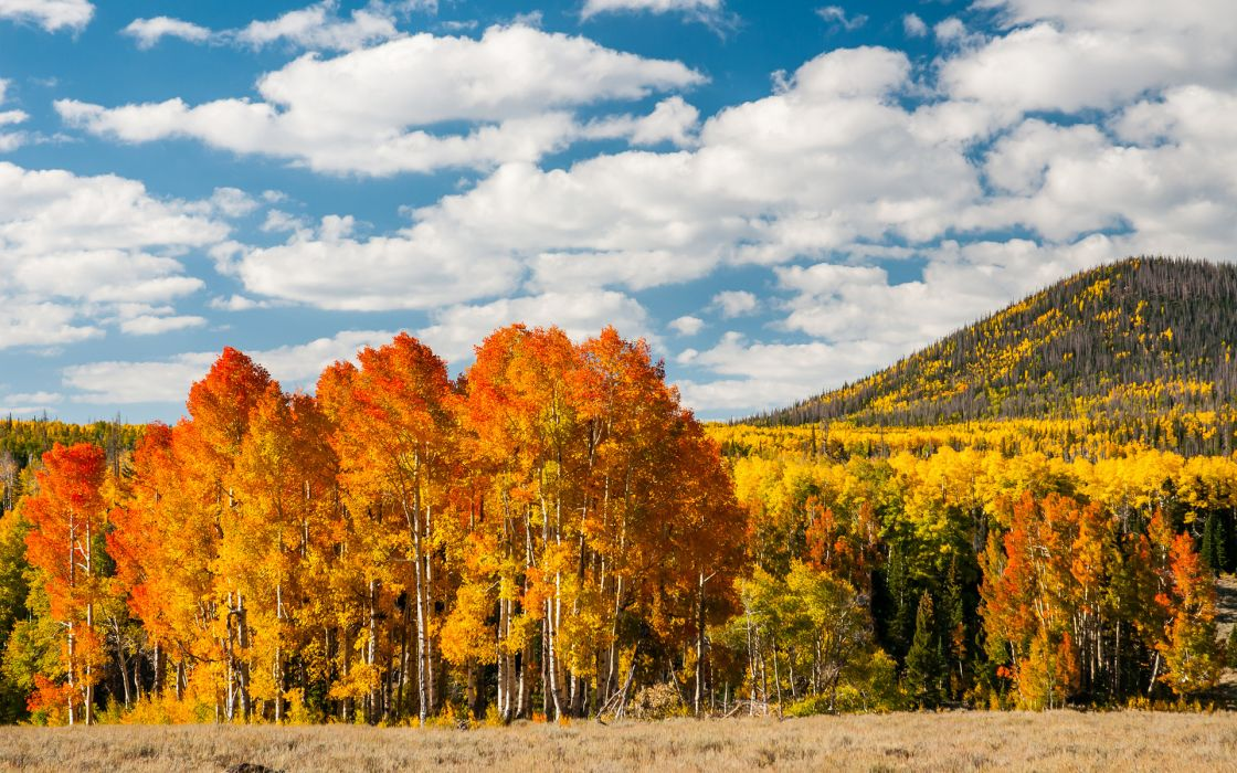 leaves wood yellow autumn trees     fs wallpaper