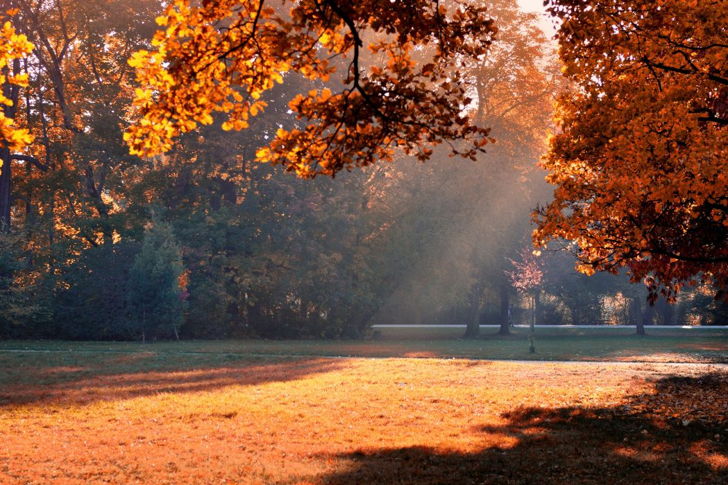 shadow foliage park trees autumn light    h wallpaper