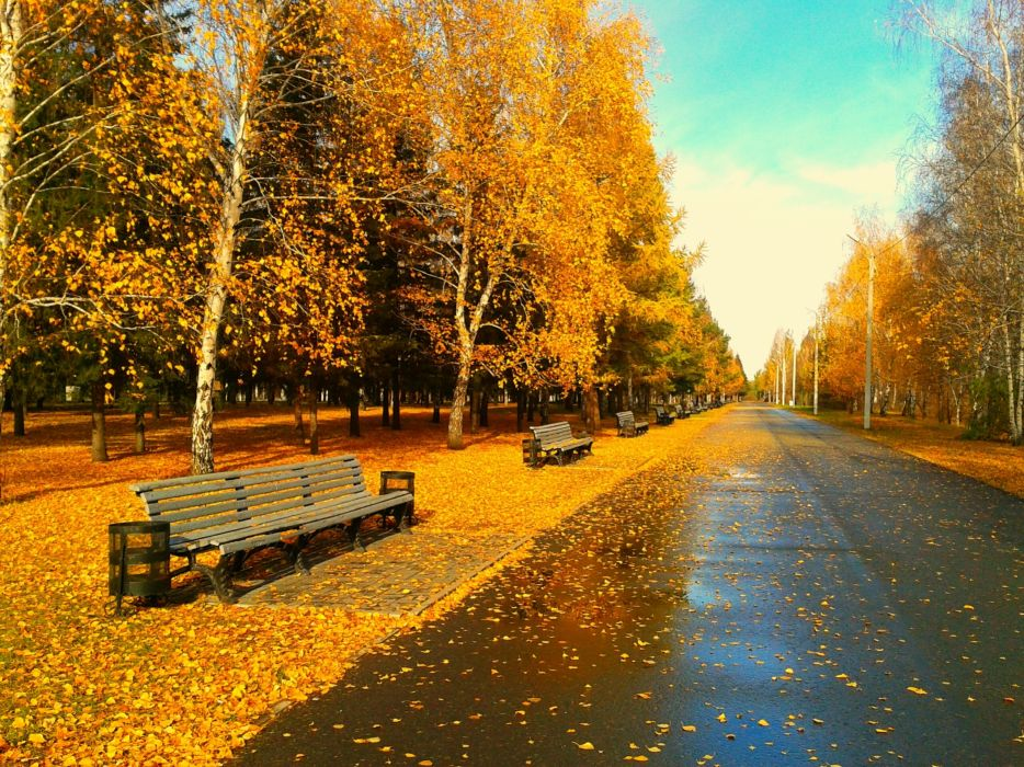trees foliage leaves golden autumn bench bench park alley wallpaper