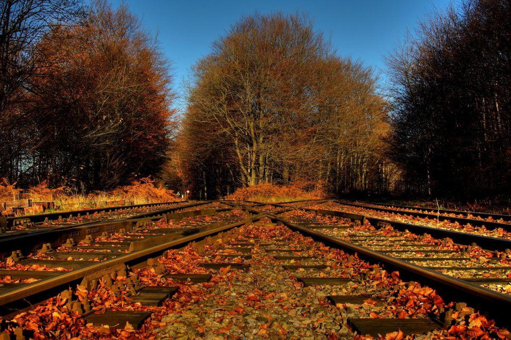 trees foliage leaves railroad tracks crossing road autumn wallpaper