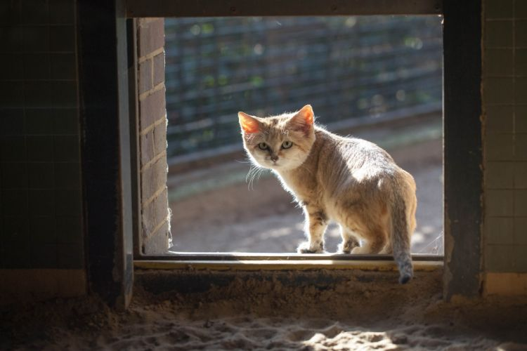 window cat wallpaper