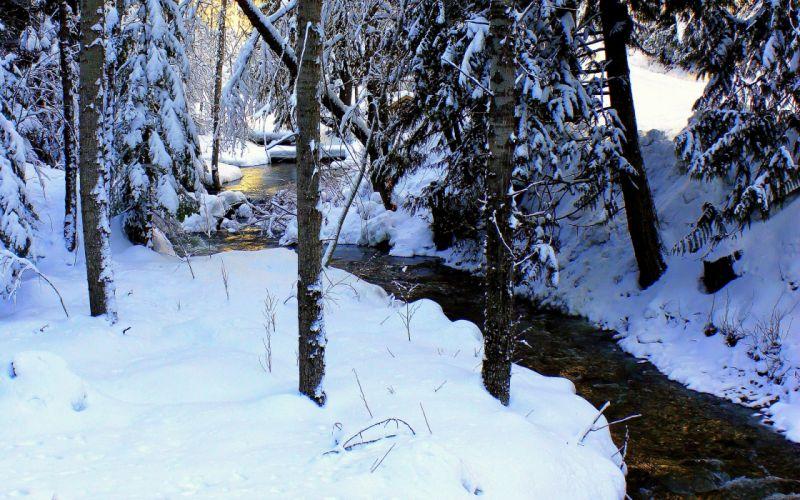 winter river forest trees landscape wallpaper