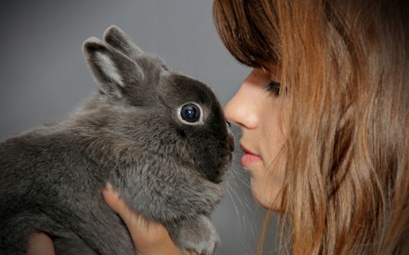 Girl With Rabbit wallpaper