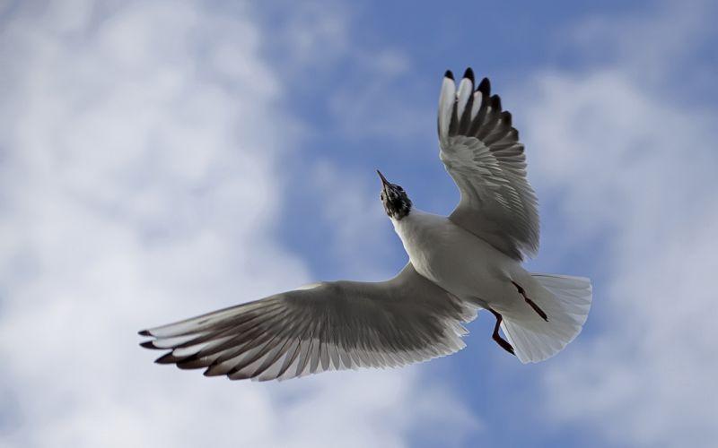 Flying Bird wallpaper