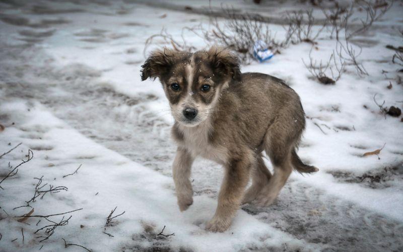 Dog Puppy Snow Sad Lonely wallpaper