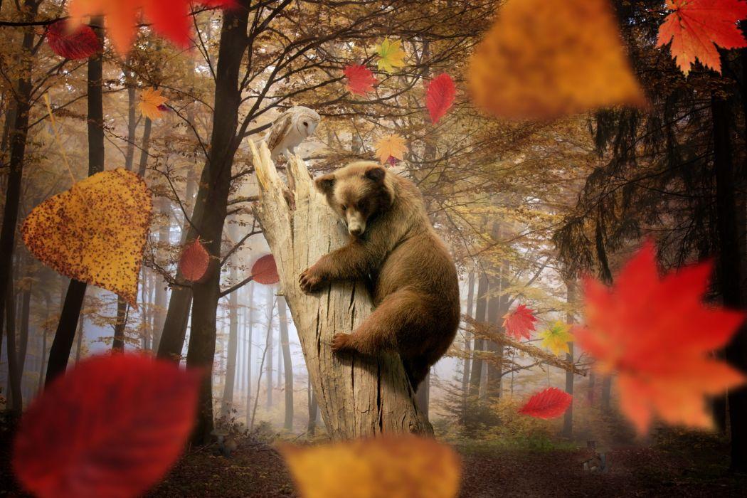 Bear Brown Autumn Forest Foliage Animal owl wallpaper